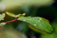 Leaf with rain droplets Stock Photos