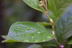 Leaf with rain droplets. Green leaf with rain droplets on it Royalty Free Stock Photo