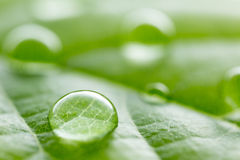 Leaf with rain droplets Royalty Free Stock Photo