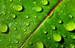 Leaf with rain droplets Stock Image