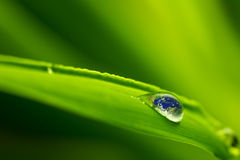 Leaf with rain droplets - Recovery earth concept Stock Images