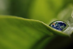 Leaf with rain droplets( Recovery - earth concept ) Stock Images