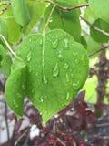 Leaf with rain drops Stock Photo