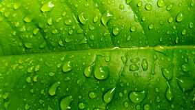 Leaf with rain drops Stock Image