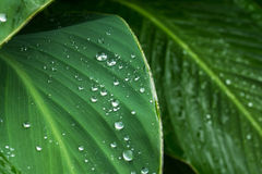 Leaf with rain drops Stock Images