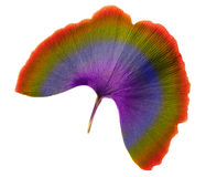Leaf of rainbow Royalty Free Stock Photography