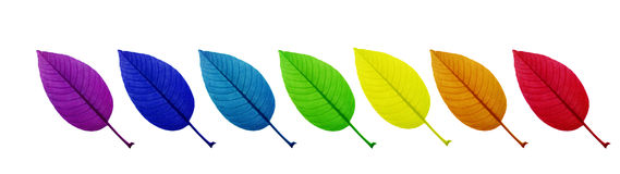 Leaf with rainbow colour stock image
