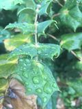Raindrops on leaf. Leaf with a raindrop after a storm Royalty Free Stock Images