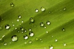 Leaf and raindrops. Closeup of raindrops on a green leaf royalty free stock image