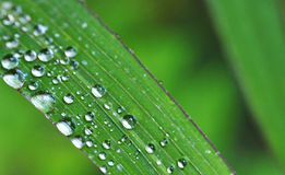 Leaf and raindrops. Green leaf and raindrops background Stock Photo