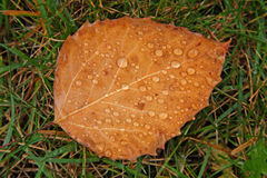 Leaf with raindrops Royalty Free Stock Photos