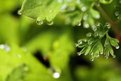 Leaf & raindrops Royalty Free Stock Photos