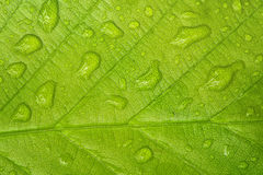 Leaf with raindrops Stock Photo