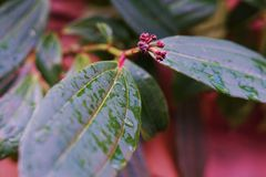Leaf. Raining! Green Leaf with new life growing up Royalty Free Stock Photos