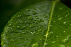 Leaf rainy Stock Photo