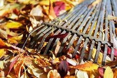 A leaf rake for Fall Foliage Royalty Free Stock Photo