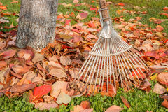 Leaf rake and leaves stack Royalty Free Stock Photos