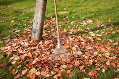 Leaf rake and leaves stack Royalty Free Stock Photography