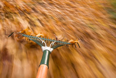 Leaf raking Royalty Free Stock Image