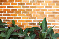 Leaf with red brick wall. Royalty Free Stock Photos