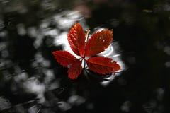 Leaf, Red, Flora, Autumn stock images