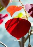 Leaf, Red, Plant, Petal Stock Photos