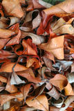 Leaf. Red texture from dead leaves with clear and sharp detail royalty free stock photo