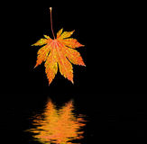Leaf reflected in water. Royalty Free Stock Photo