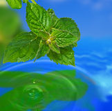 Leaf reflection. Green leaves reflecting in the water Stock Photo