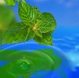 Leaf reflection. Stock Photo