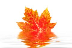 Leaf with Reflection Stock Photo