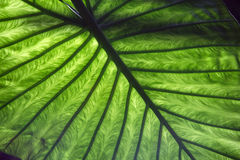 Leaf reflection - close up Stock Photos