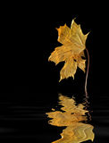 Leaf reflections Royalty Free Stock Images