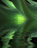 Leaf reflections. Conceptual image of plant leaves and water reflections royalty free illustration
