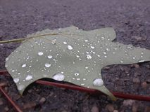 Wet leaf on pavement royalty free stock images