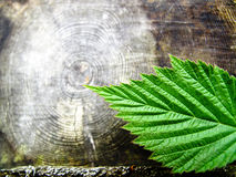 Leaf and rings Stock Images