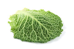 Leaf of Ripe Savoy Cabbage Royalty Free Stock Photography