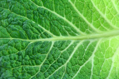 Leaf of Ripe Savoy Cabbage Isolated on White Stock Photography