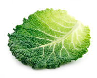 Leaf of Ripe Savoy Cabbage Isolated on White Stock Photos