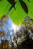 Leaf and rising sun Royalty Free Stock Images