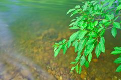 Leaf and river Royalty Free Stock Photography