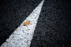 Leaf on the road Royalty Free Stock Image