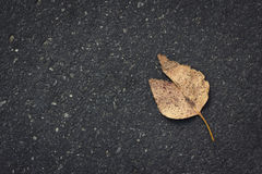 Leaf on road Royalty Free Stock Photo