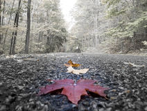 Leaf on road Stock Photos