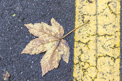 Leaf and Road. Autumn background leaf on a road Stock Photos