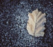 Leaf road fall season Mother Nature Royalty Free Stock Photos