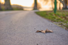 Leaf on road Royalty Free Stock Photos