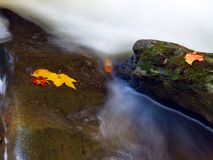 Leaf on a rock. Stream in new jersey state park Stock Photo