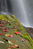 Leaf on a rock covered in moss with waterfall Royalty Free Stock Photography