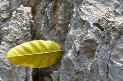 Leaf Rock Stock Photography